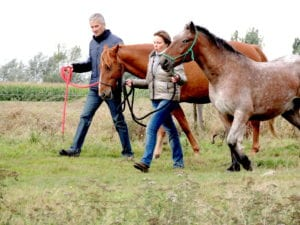 MyTeamBuilding_Horse Group Therapy 185