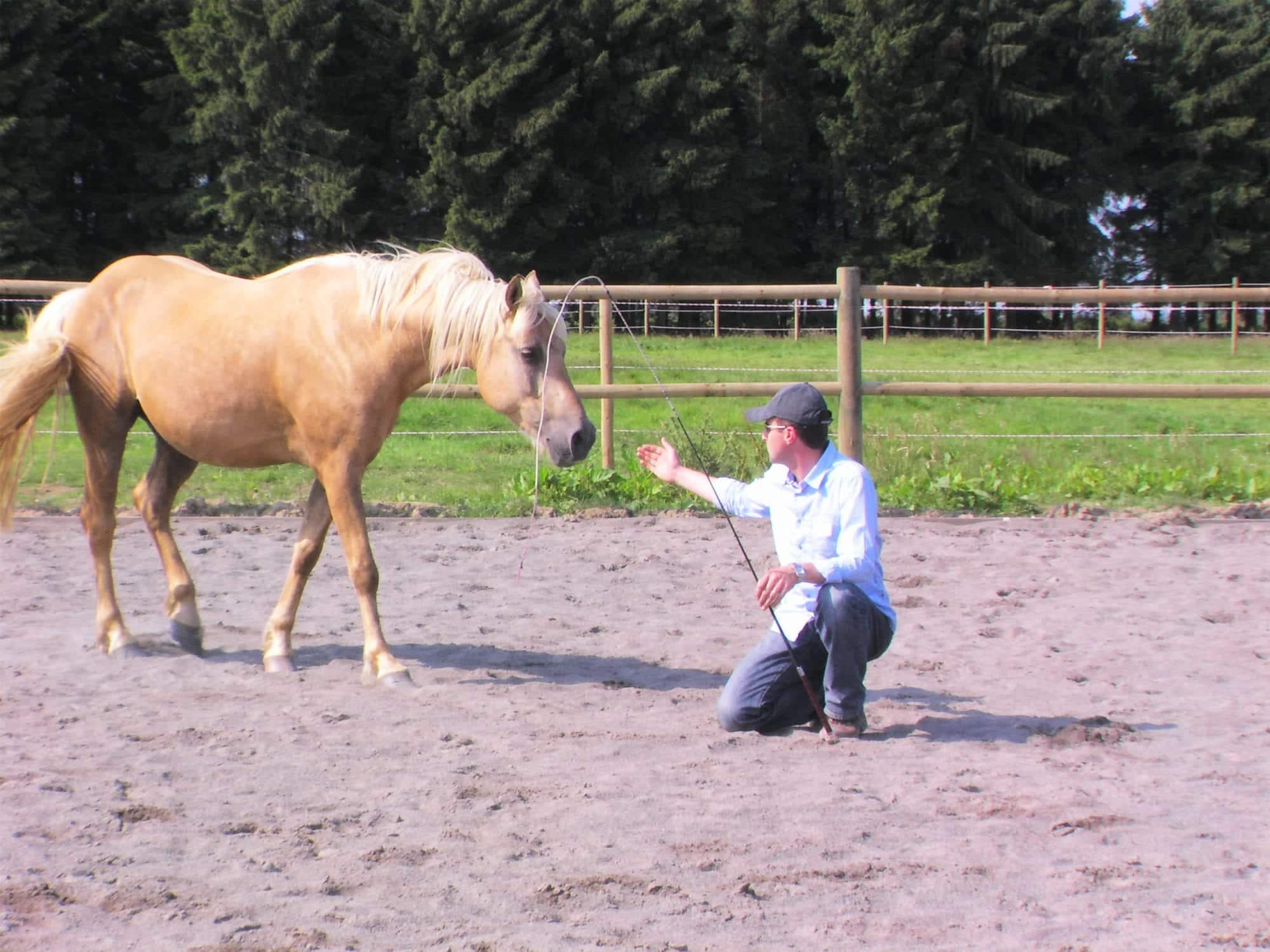 MyTeamBuilding_Incentive Paarden 187
